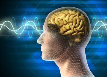 נפלאותיו של המוח האנושי, למידה ואיכות חיים (28)